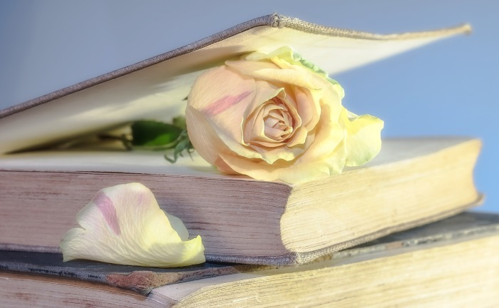 Livre + rose